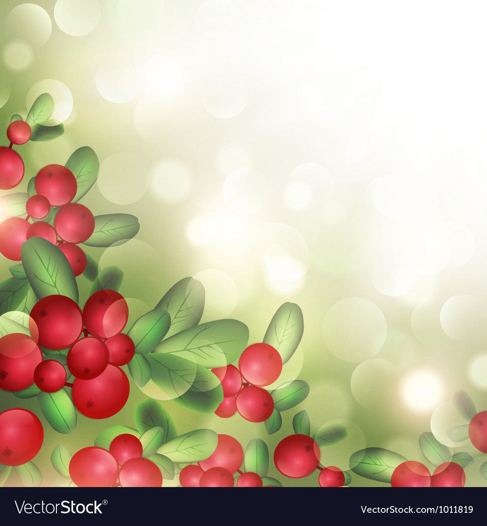 Cranberries vector