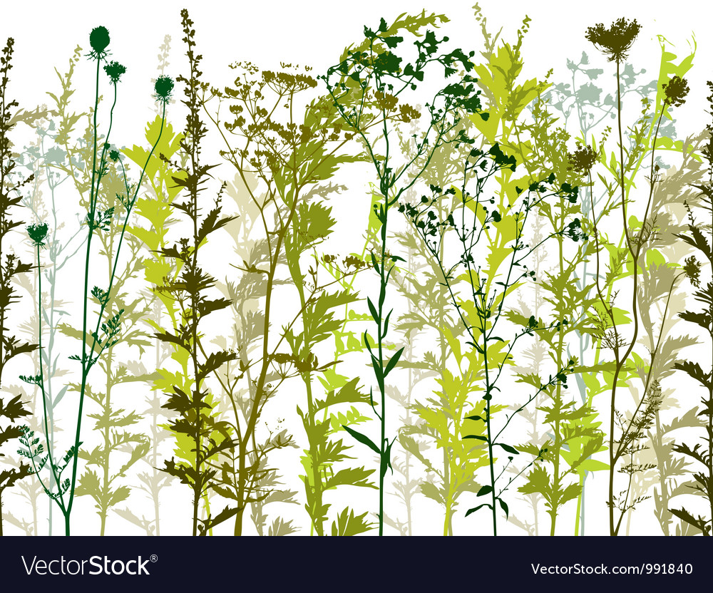 Natural wild plants and weeds vector