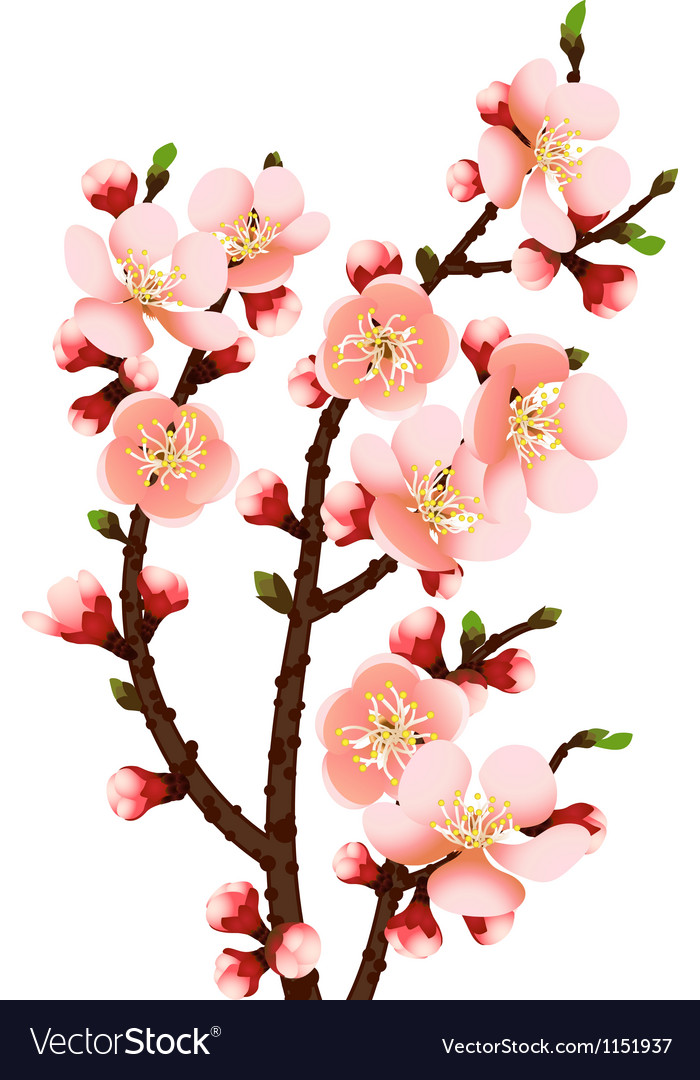 Cherry blossom branch abstract background vector
