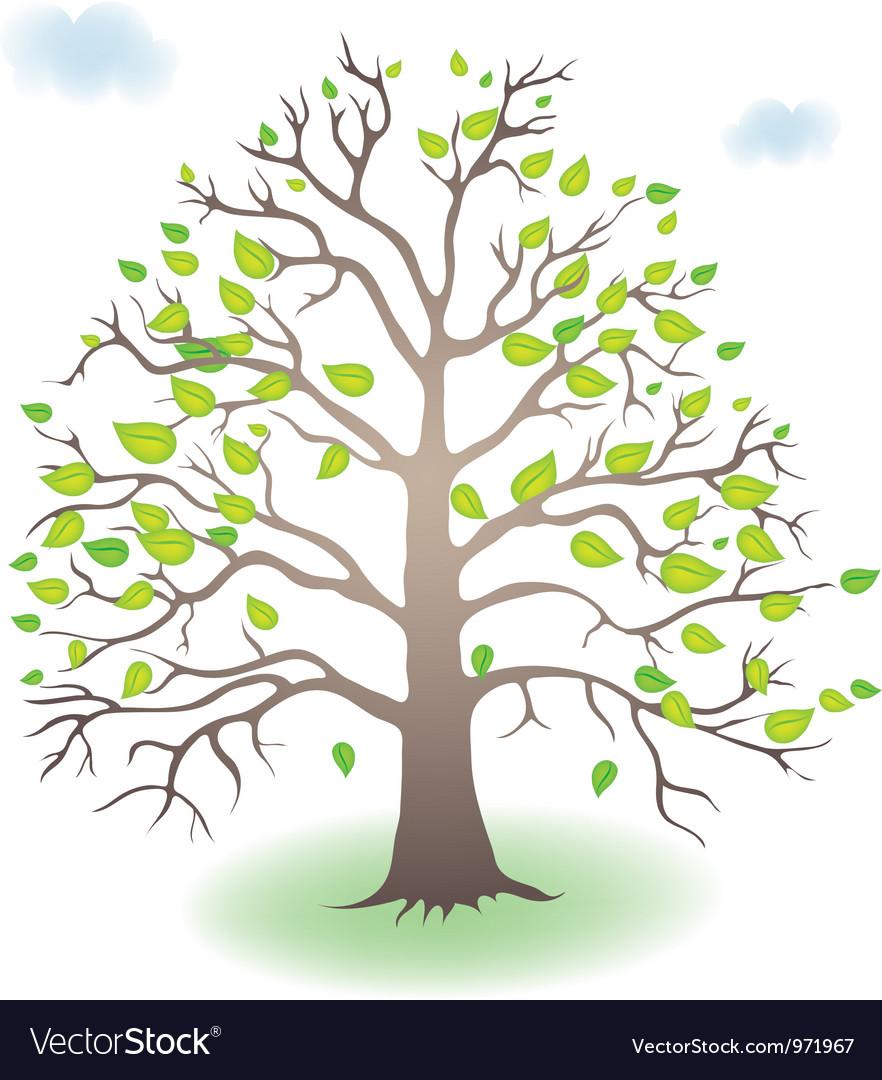 Tree in the seasons vector by ola ola image 971967 vectorstock