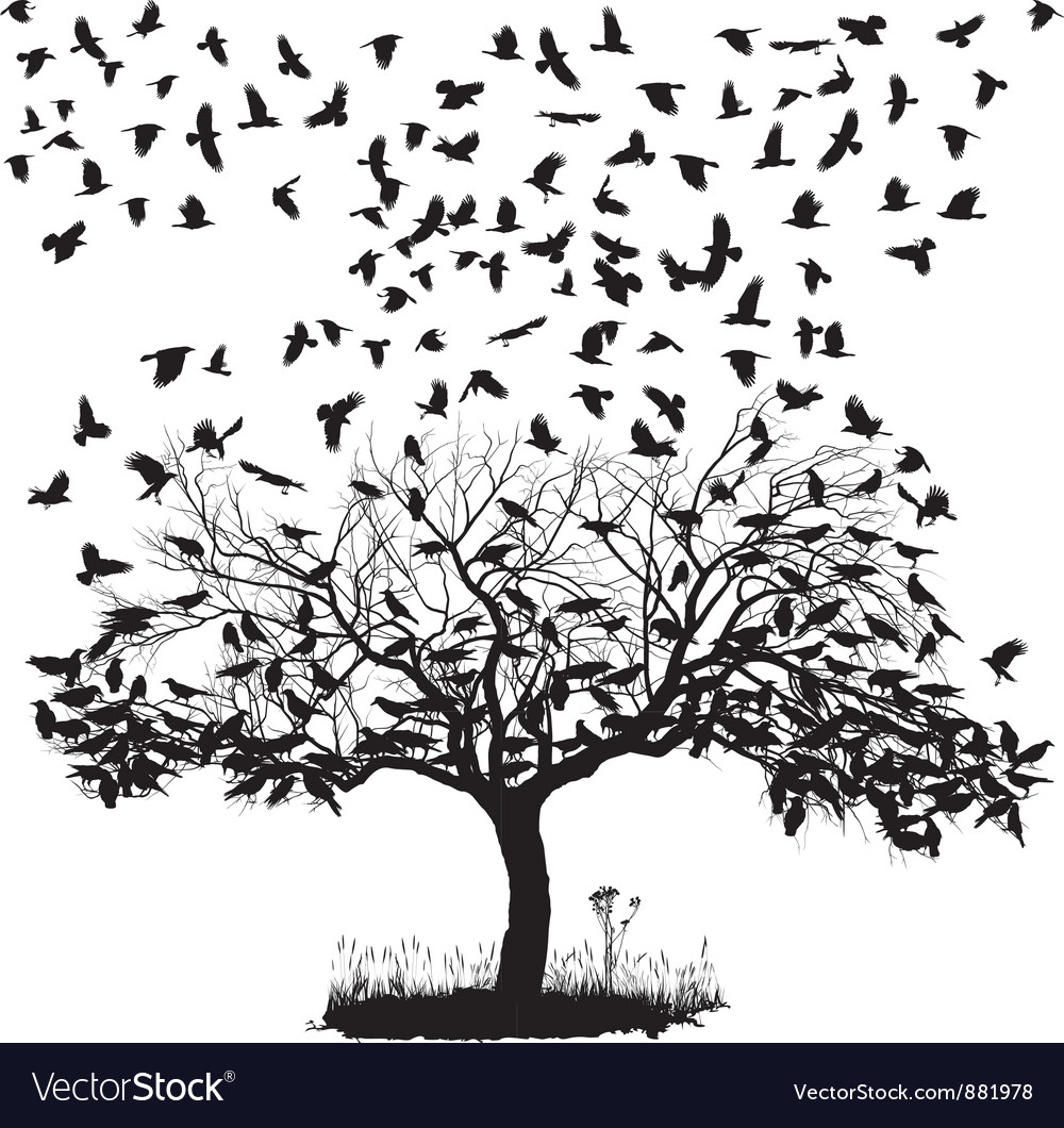 Crows in a tree vector