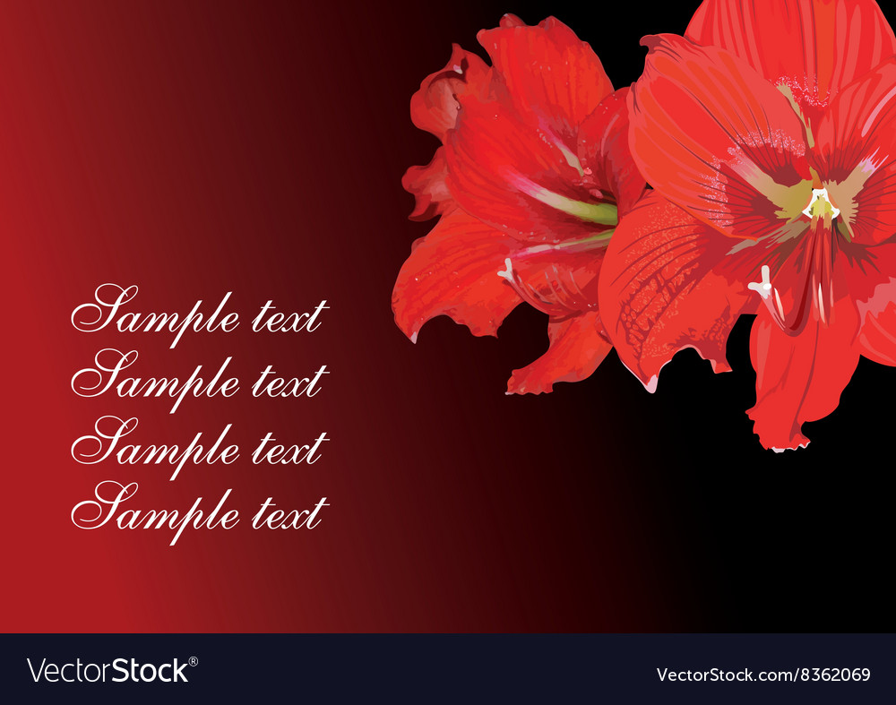 Red lily design with text space
