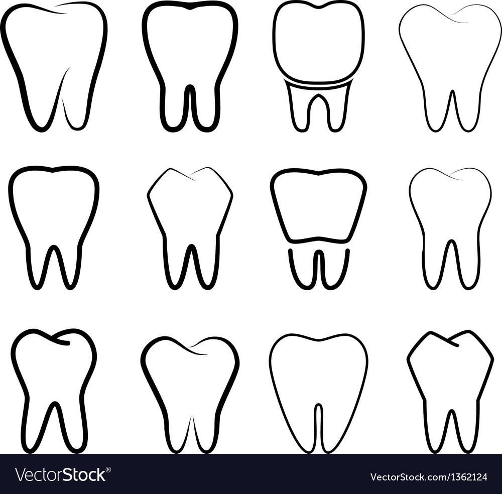 Set of the stabilized teeth on a white background vector