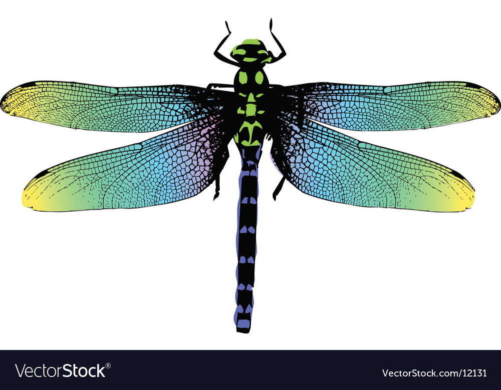 Dragonfly vector