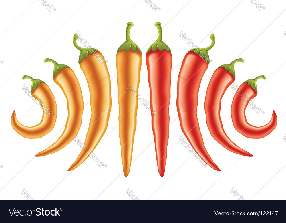 Hot red and yellow peppers vector