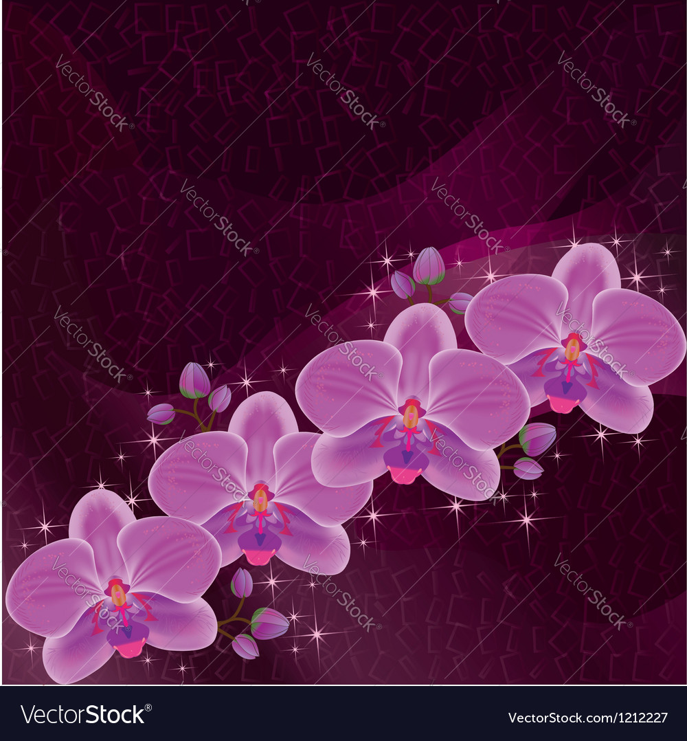Invitation or greeting card dark red with orchid vector