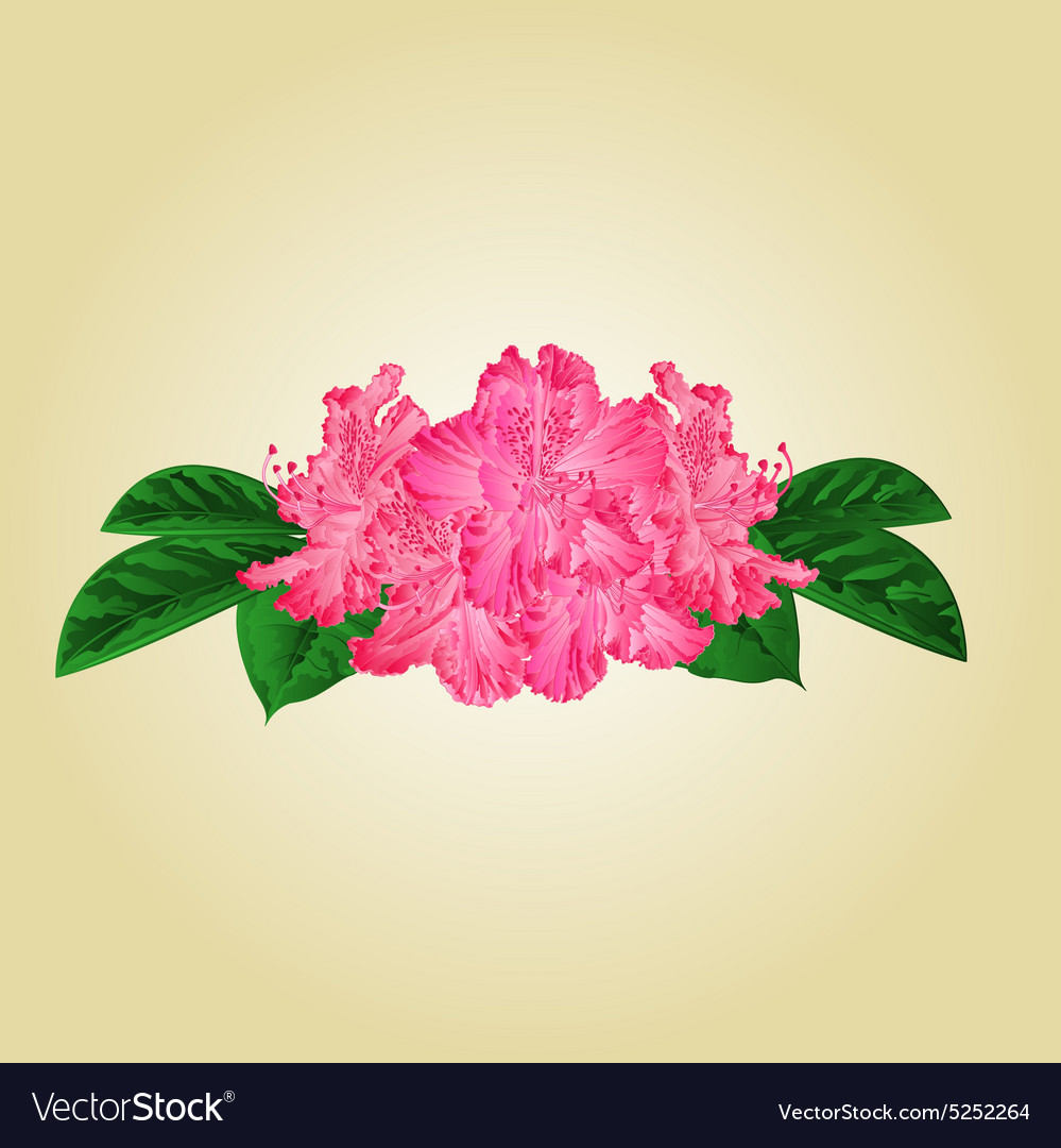 Festive bouquet pink rhododendrons