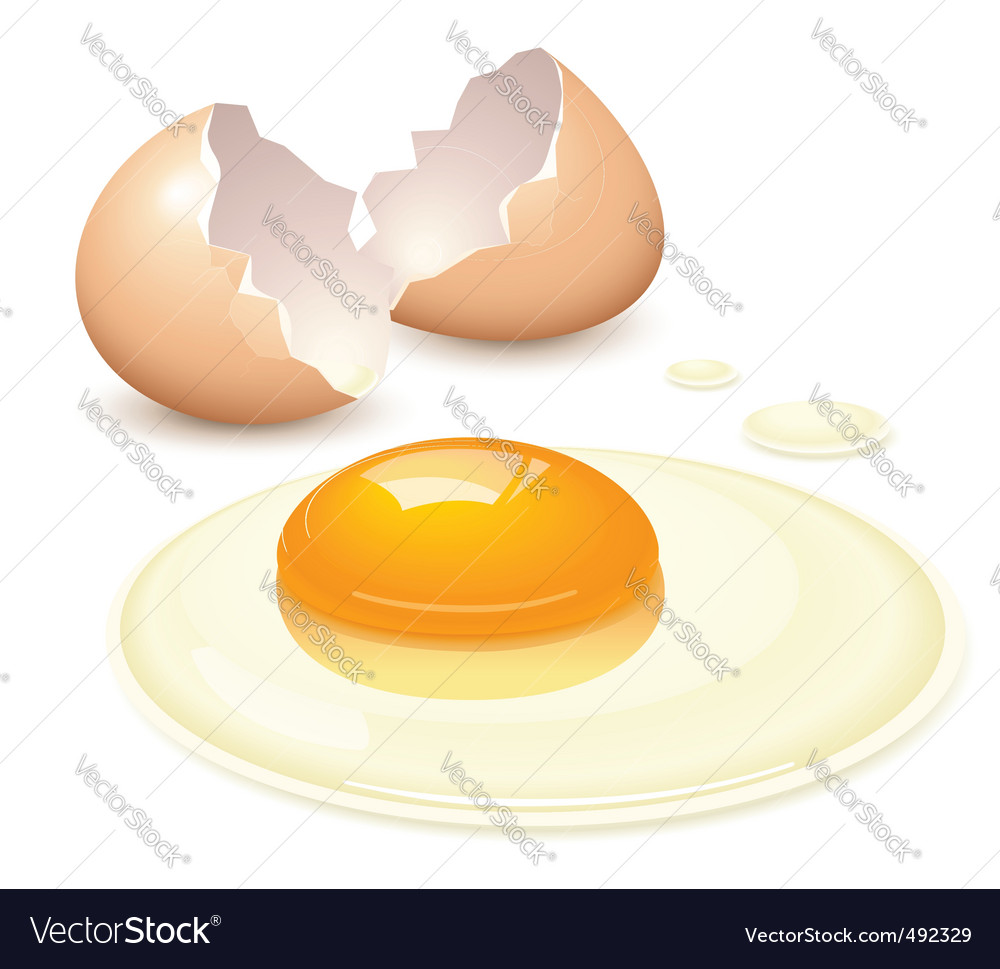 Broken egg vector
