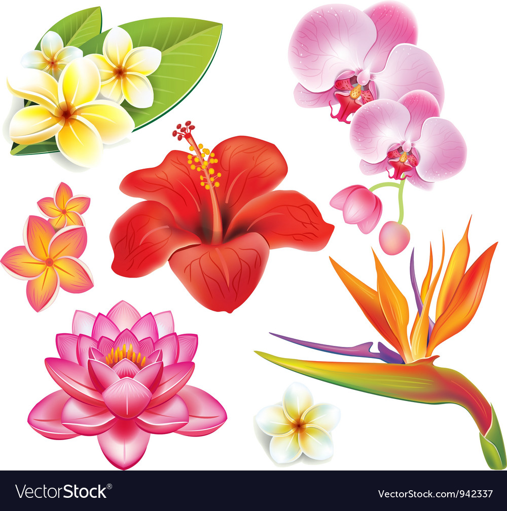 Set of tropical flowers vector