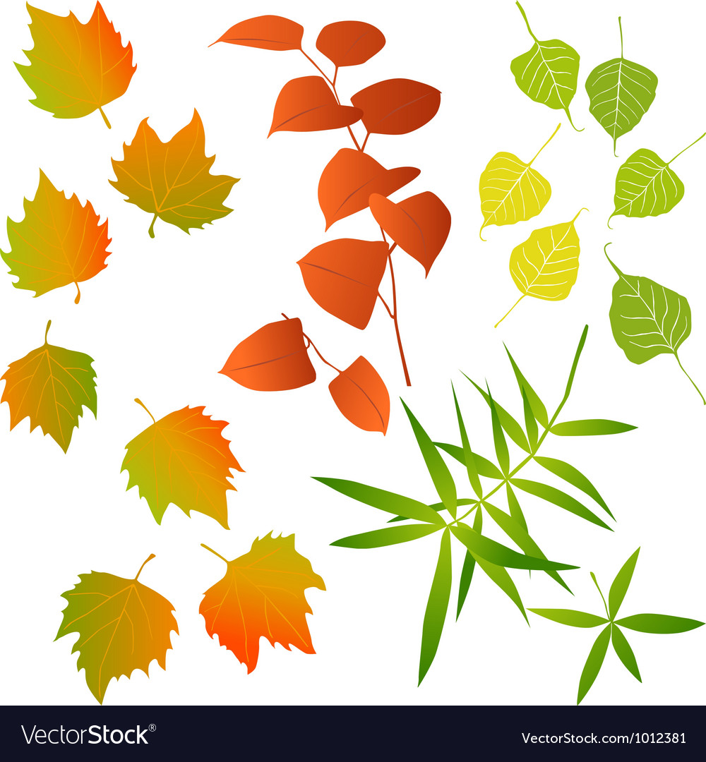 Leaf  collection for designers vector