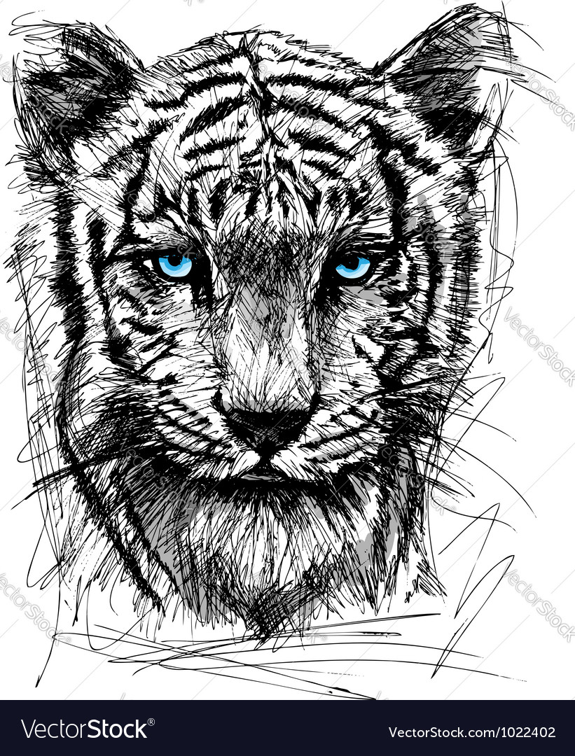 Hand draw sketch of white tiger vector