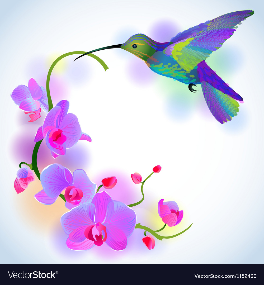 Rainbow hummingbird with violet orchids vector