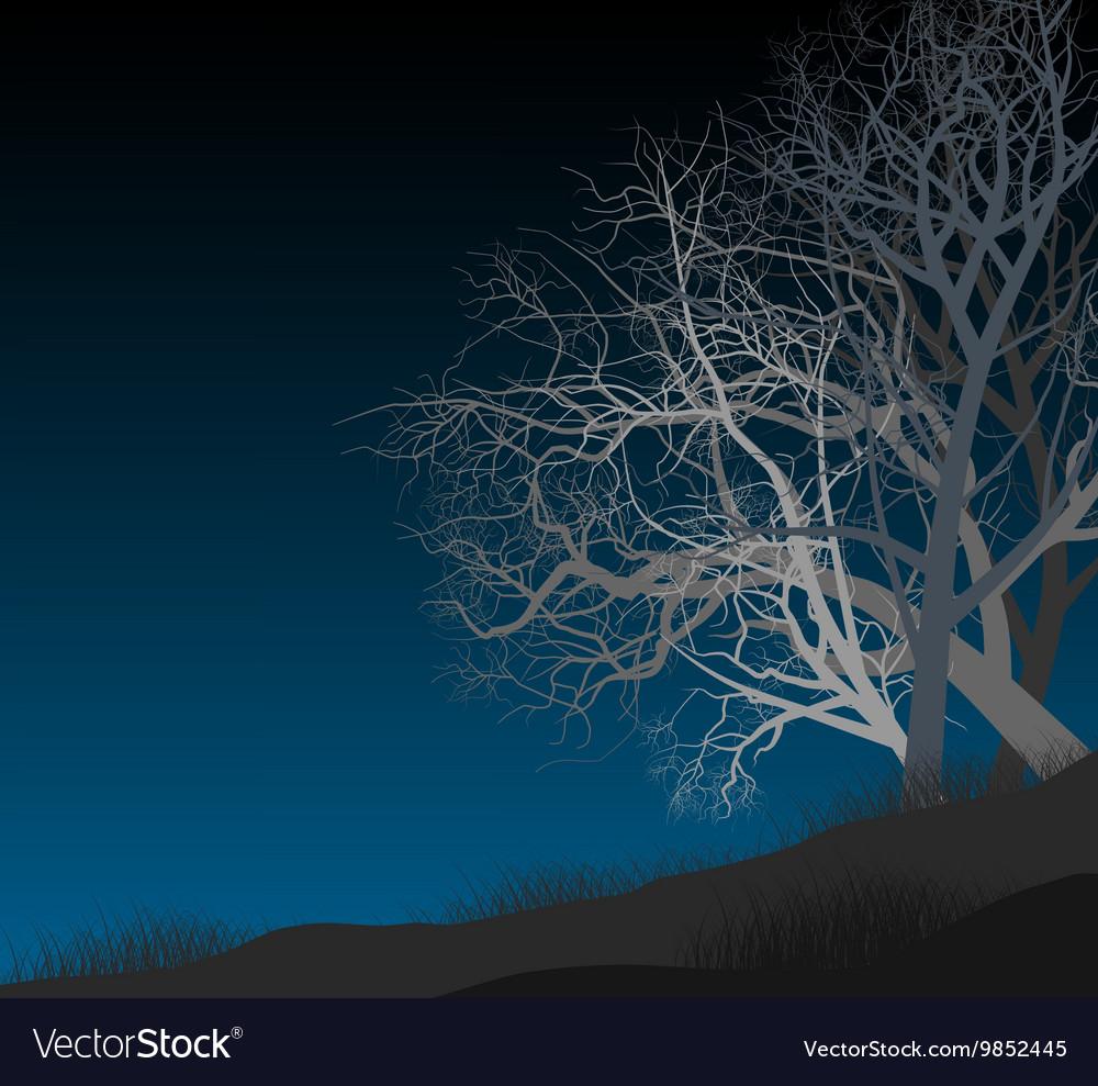 Night autumn