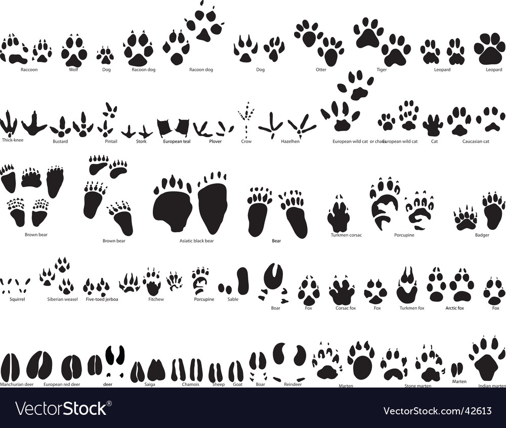 Animal trails vector