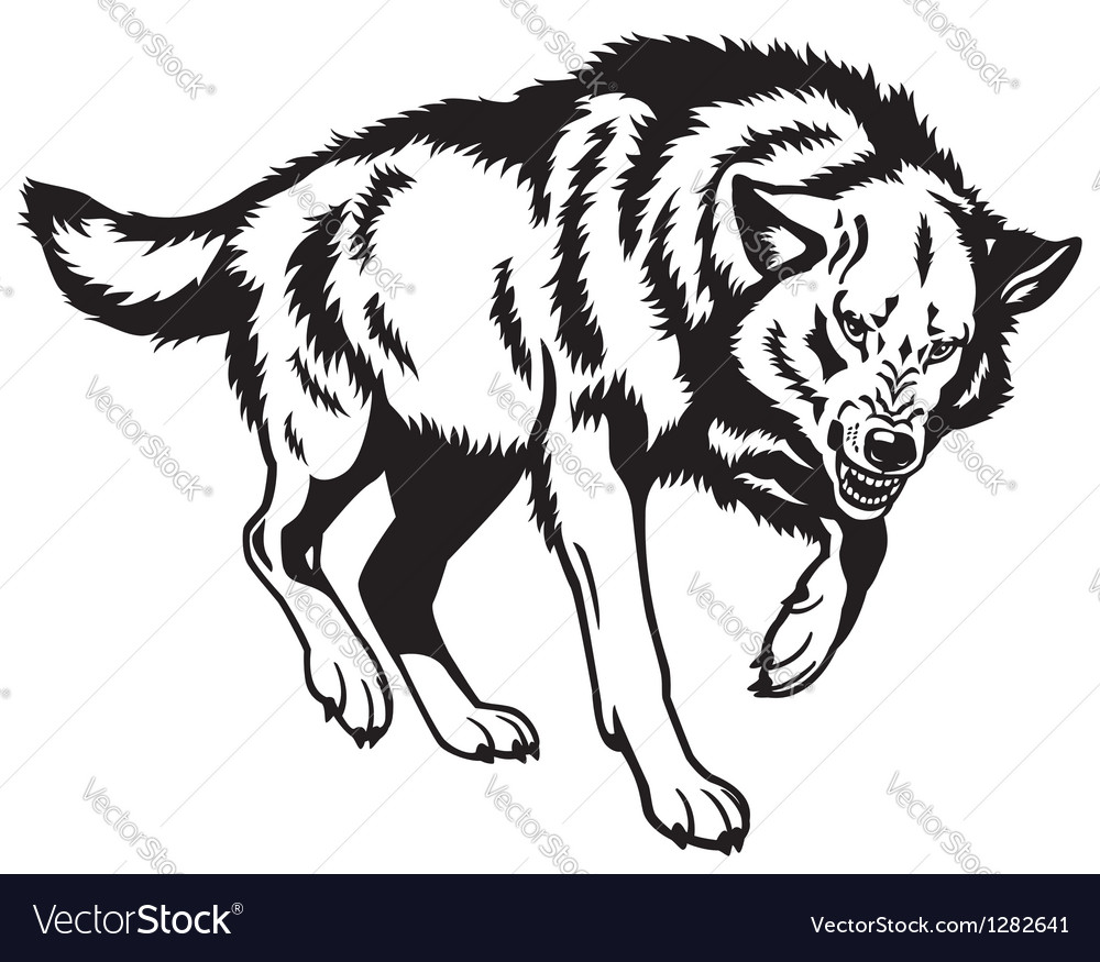 Canis lupus black white vector