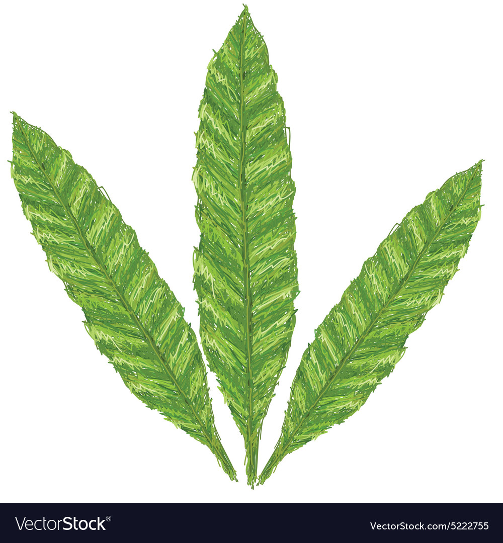 Unique style of fern leaves scientific name