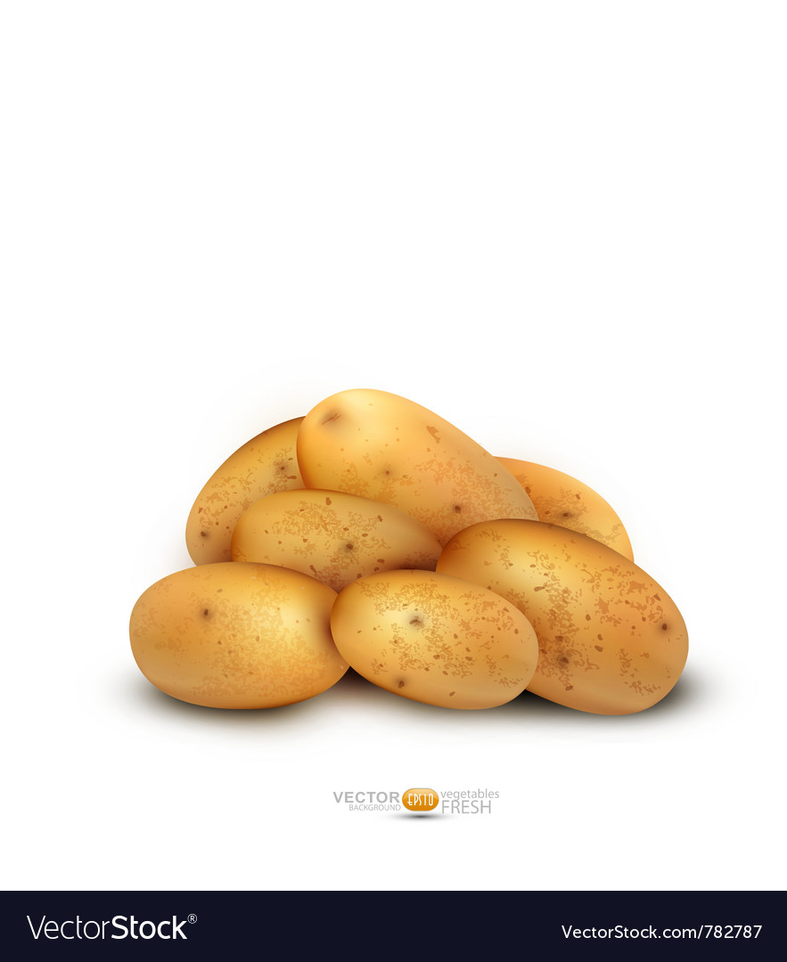 Potato tubers vector