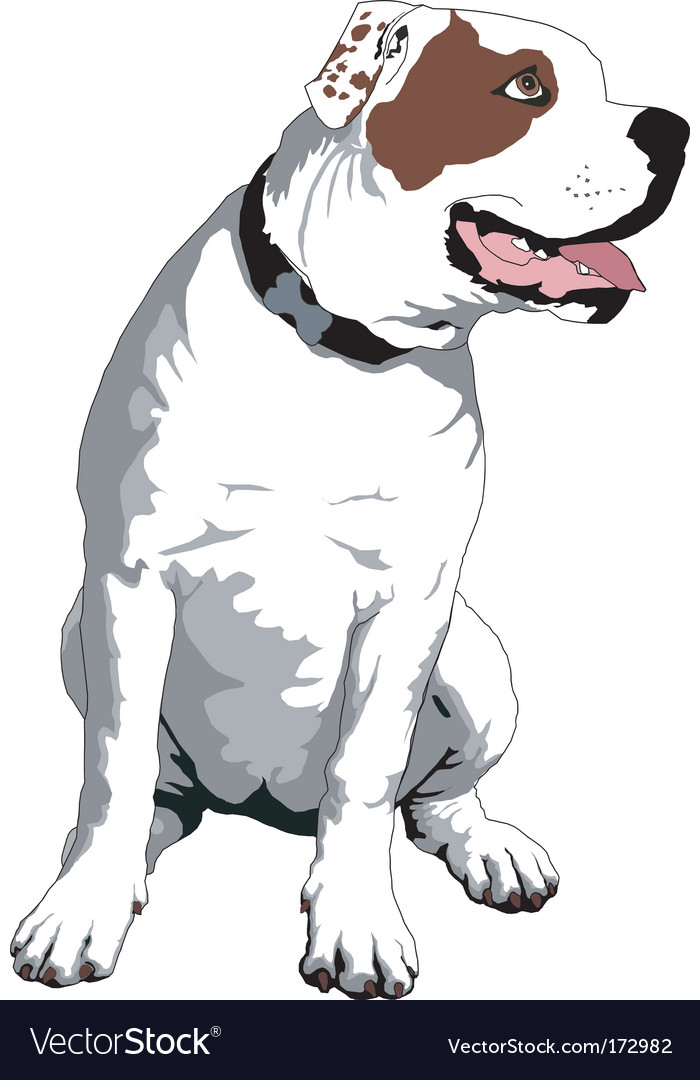 American bulldog vector - photo#1