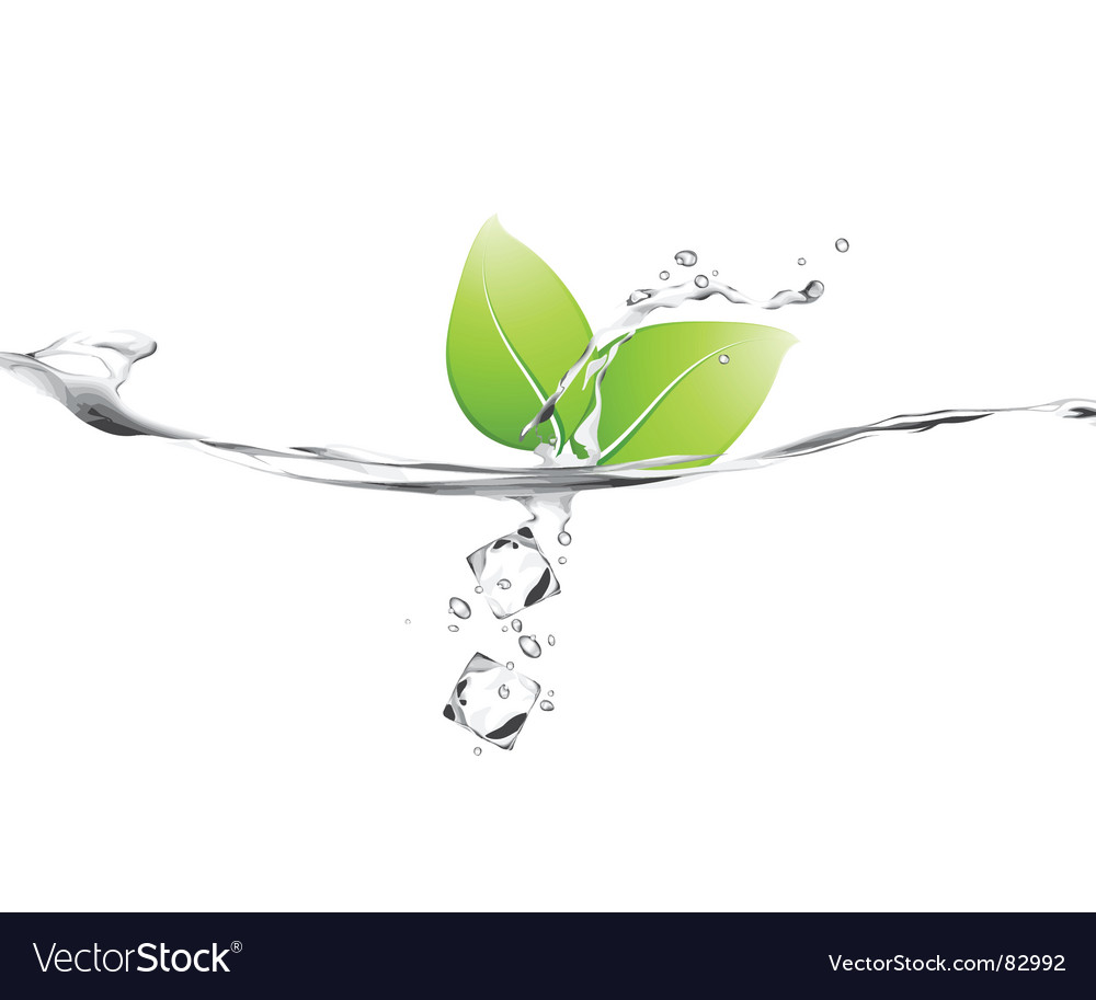 Leaf splash vector