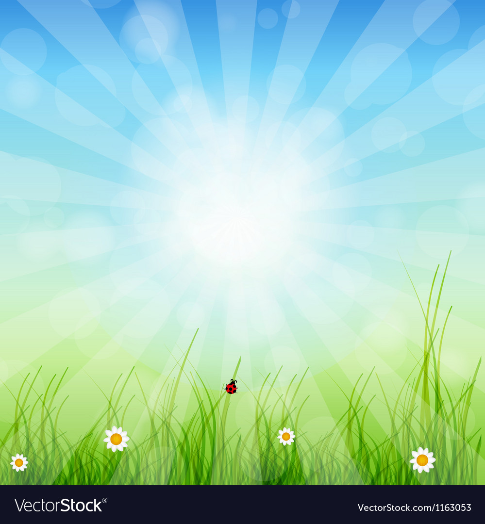 Spring green background grass and sun vector