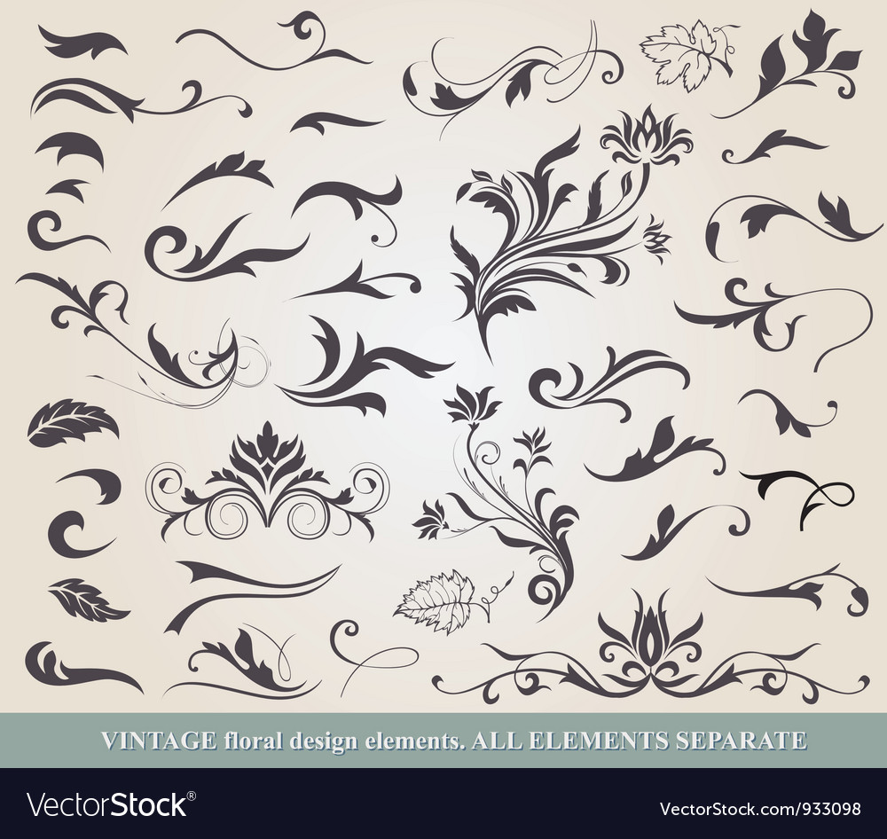 Collection of floral elements vector