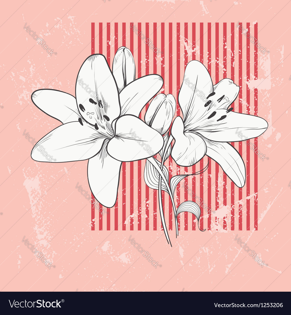 Flower lily hand drawn vector