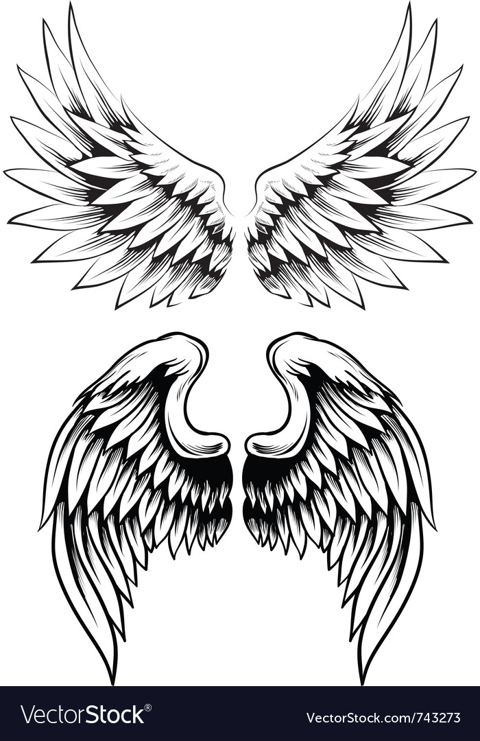 Hand drawn wing set vector