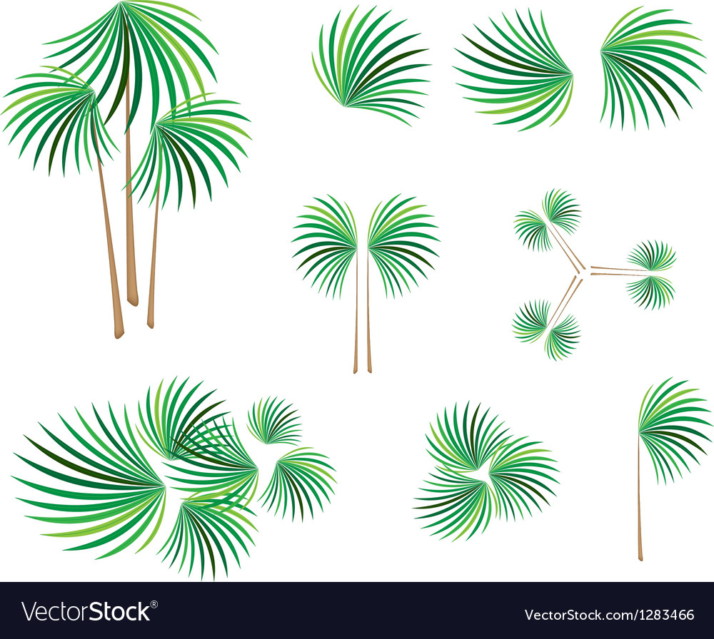 Isometric of lady palm tree on white background vector