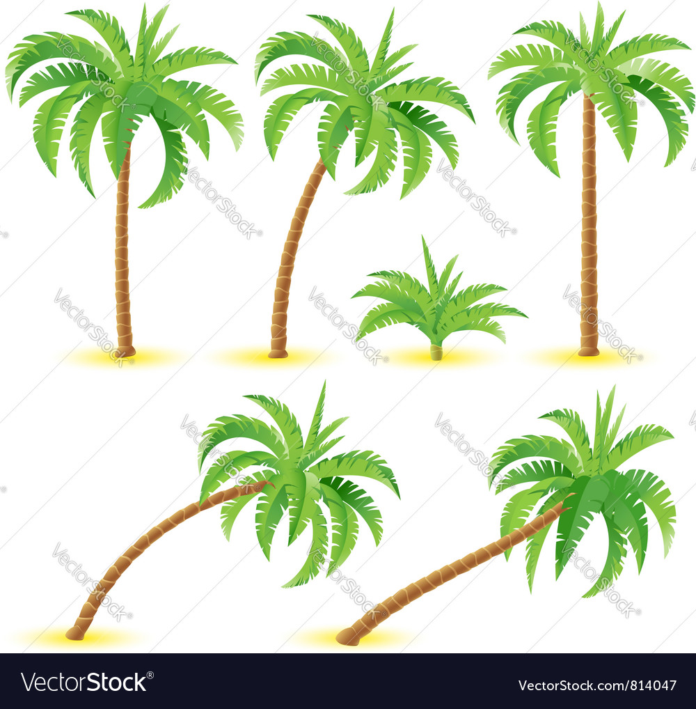 Coconut palms vector