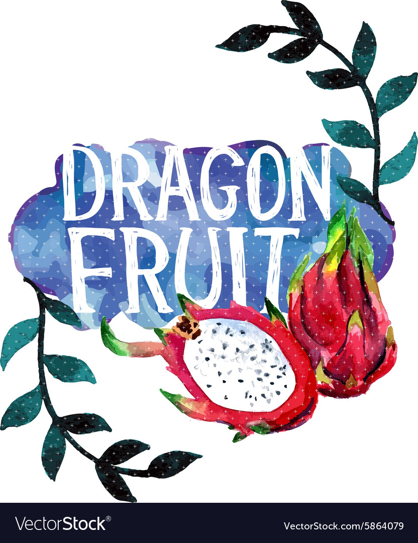 Watercolor with dragon fruit