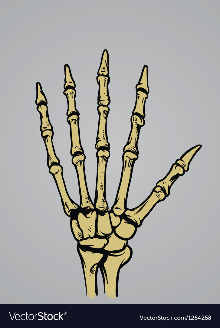 Hand bone anatomy vector
