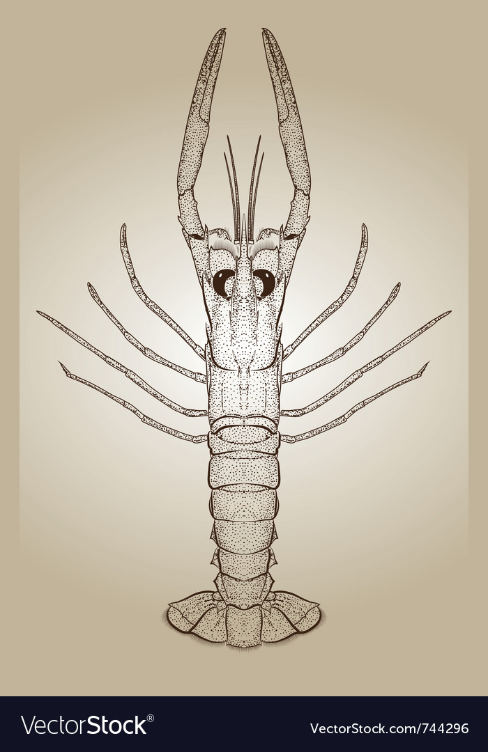 Engraved lobster vector
