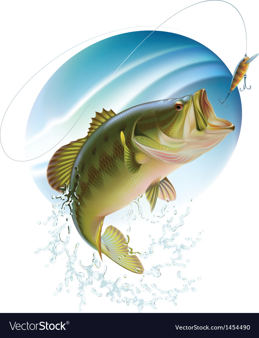 Largemouth bass catching a bite vector