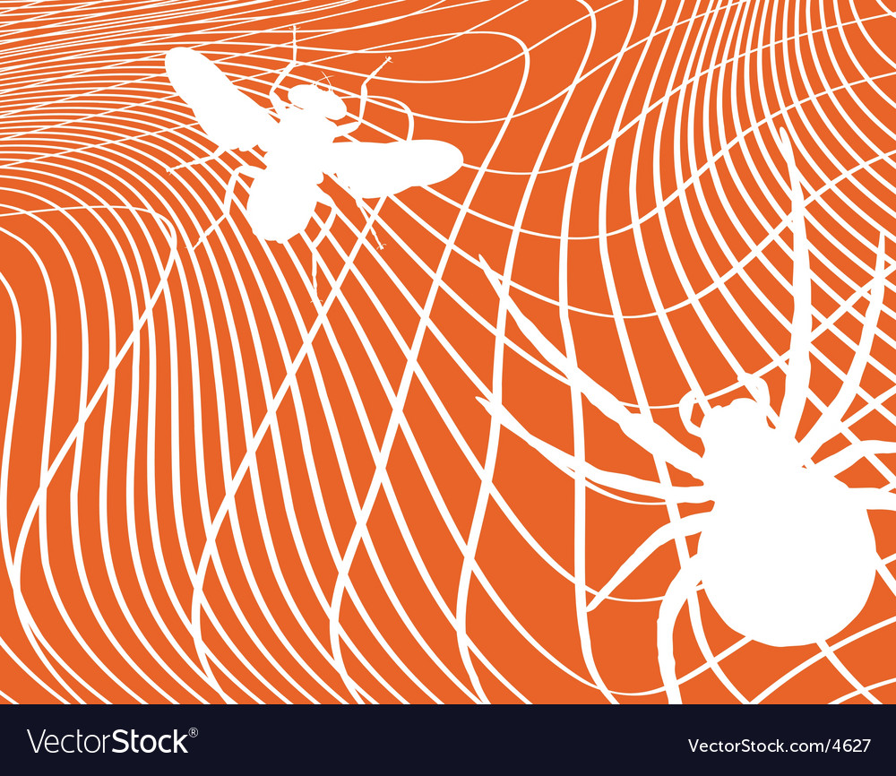 Spider and fly vector