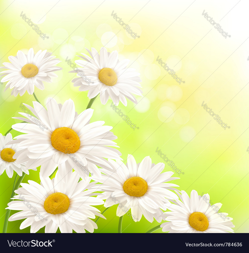 Beautiful daisies background vector