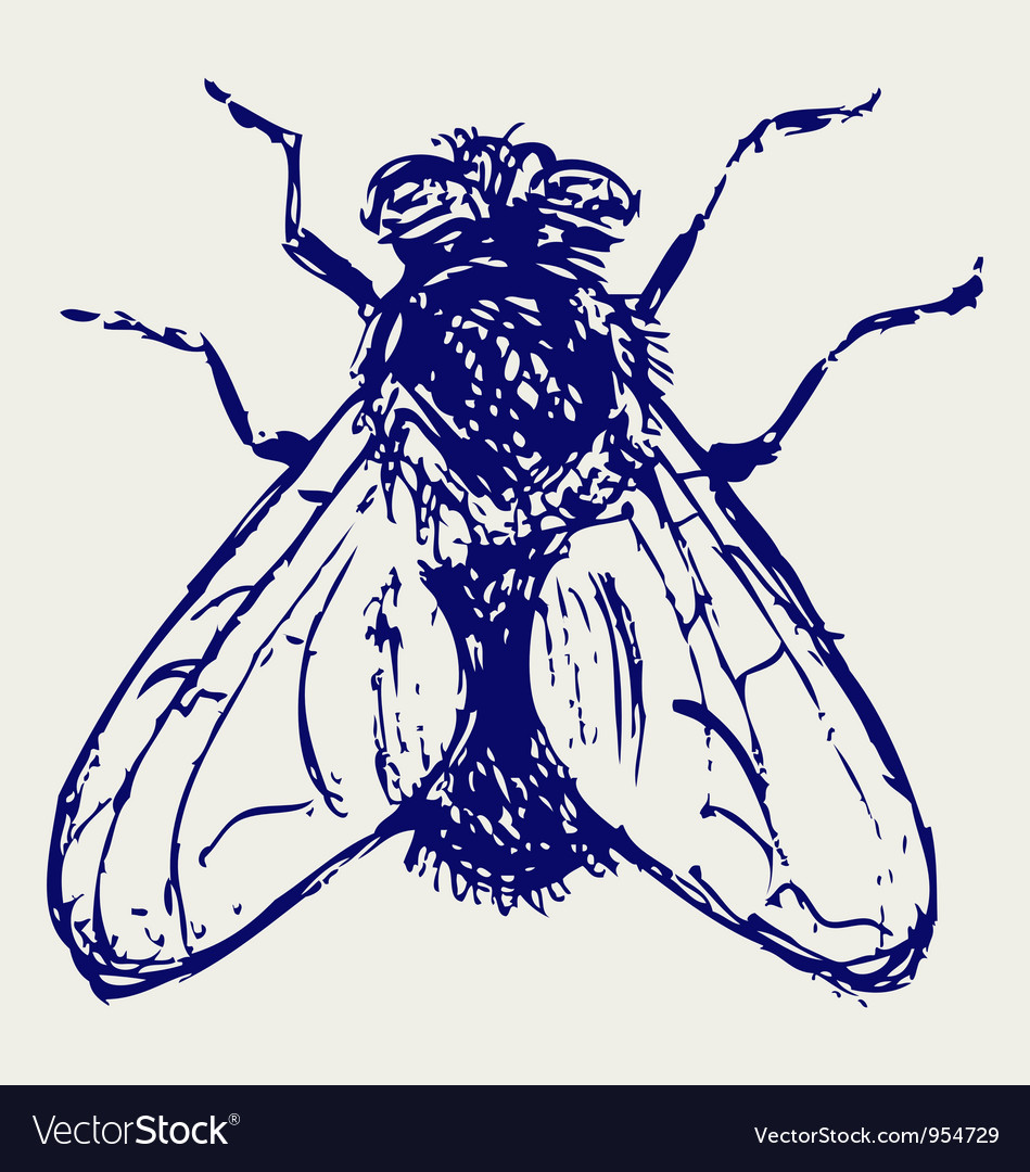 Black flies vector