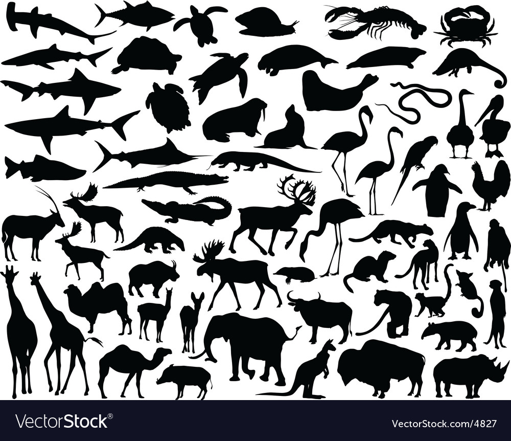 Animals vector