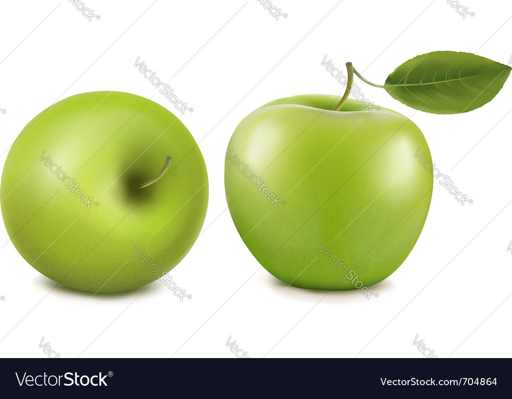 Fresh green apples vector