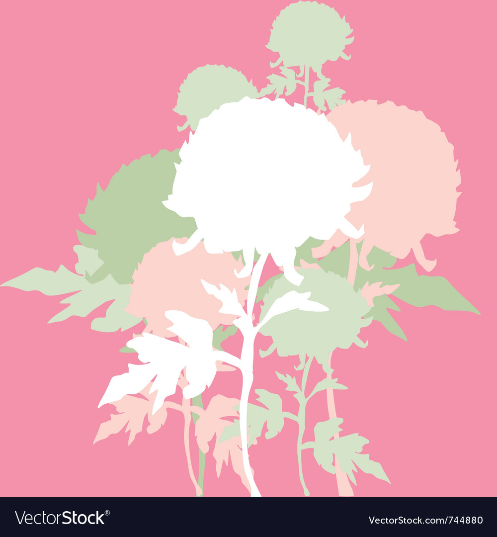 Peon flowers vector