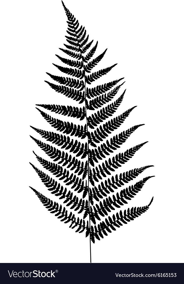 Fern Leaf Vector