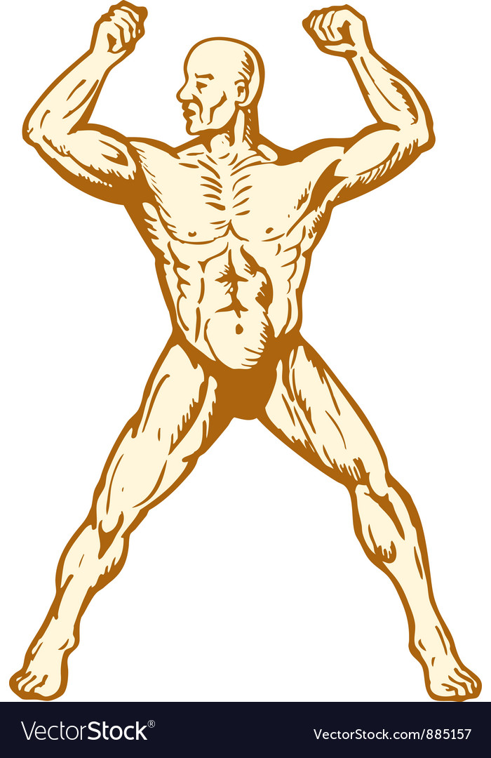 Male human anatomy body builder flexing muscle vector