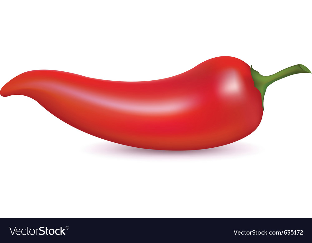 Red hot chili pepper vector