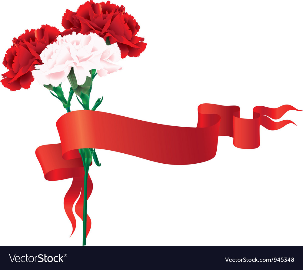 Red and white carnations with a ribbon vector