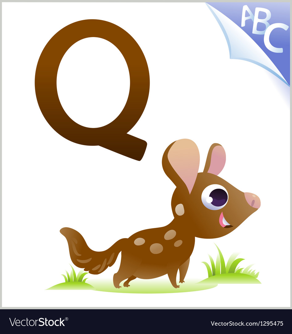 Animal alphabet for the kids q for the quoll vector
