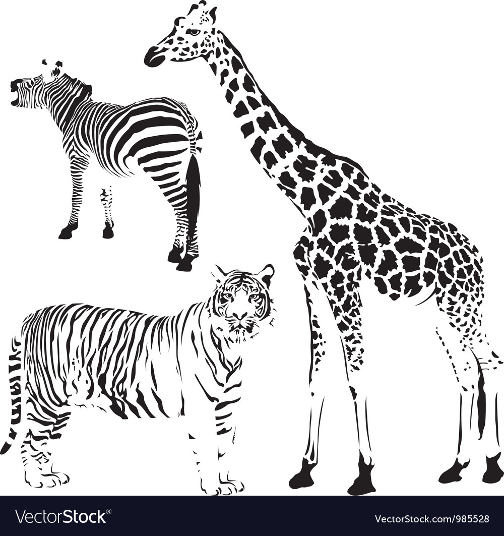 African striped and spotty animals vector