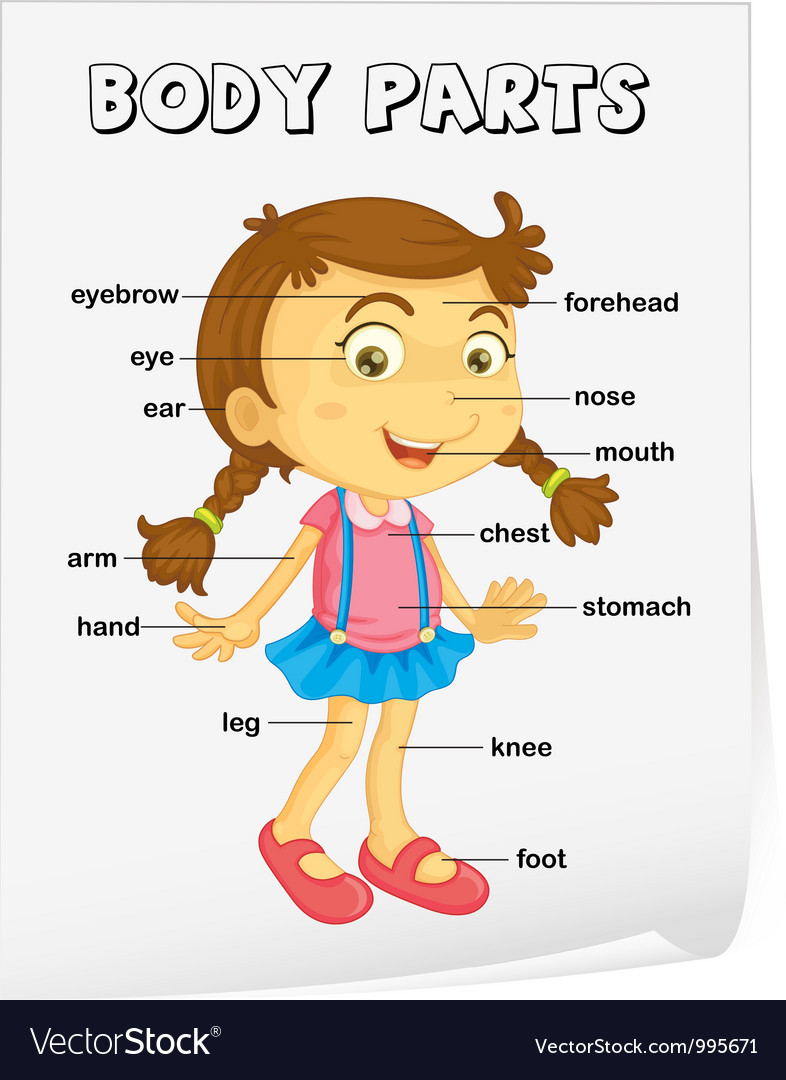 External Human Body Parts For Kids