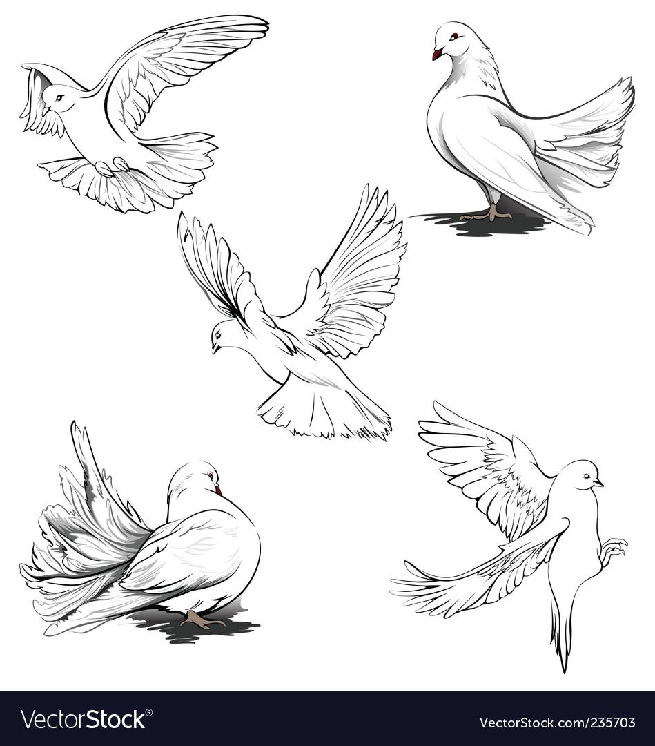 Doves silhouette vector by MAC_Elena - Image #235703 - VectorStockDove Bird Drawing Tattoo
