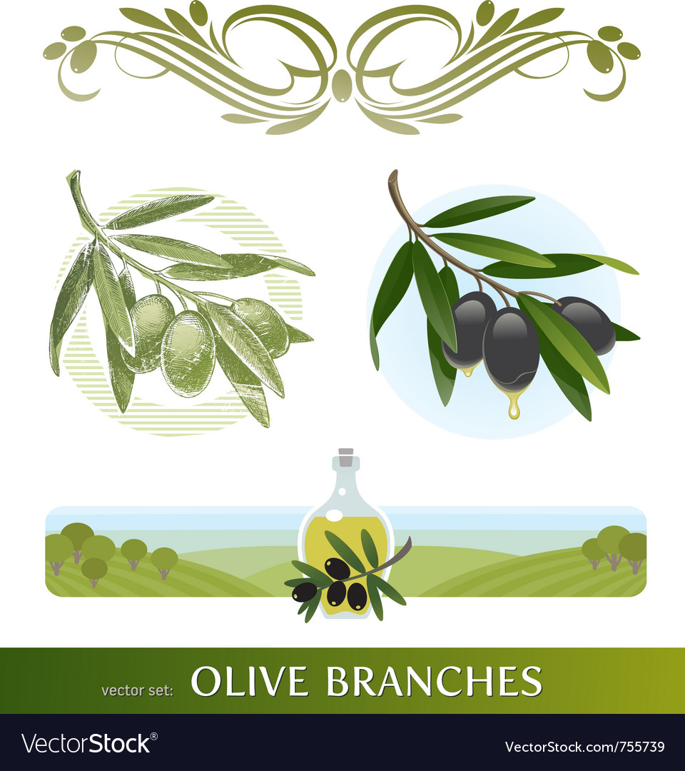 Set  olive branches vector