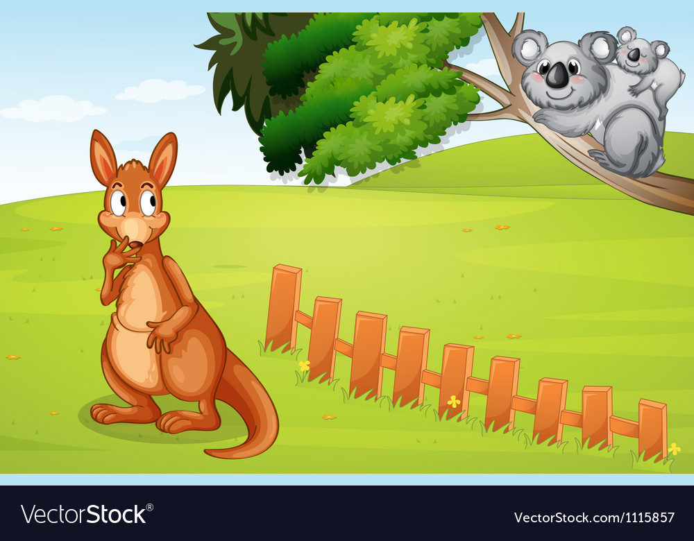 Kangaroo and koalas vector
