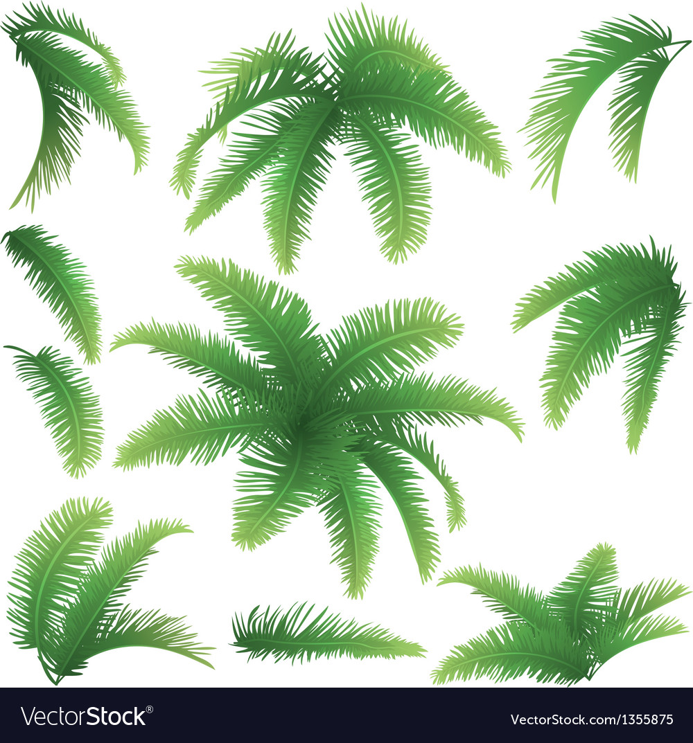 Branches of palm trees vector